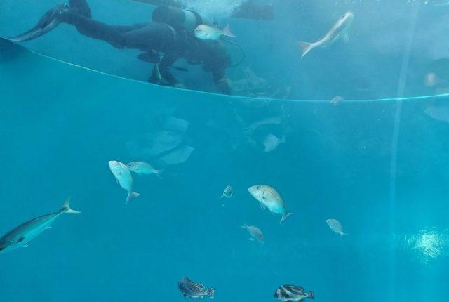 四国水族館 大きい水槽前