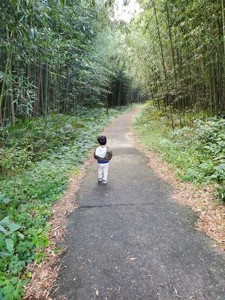 竹林と石張の遊歩道