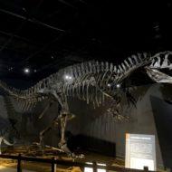 東京ドームシティ恐竜展